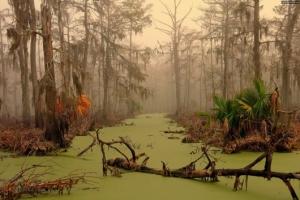Мистические обитатели сибирских лесов